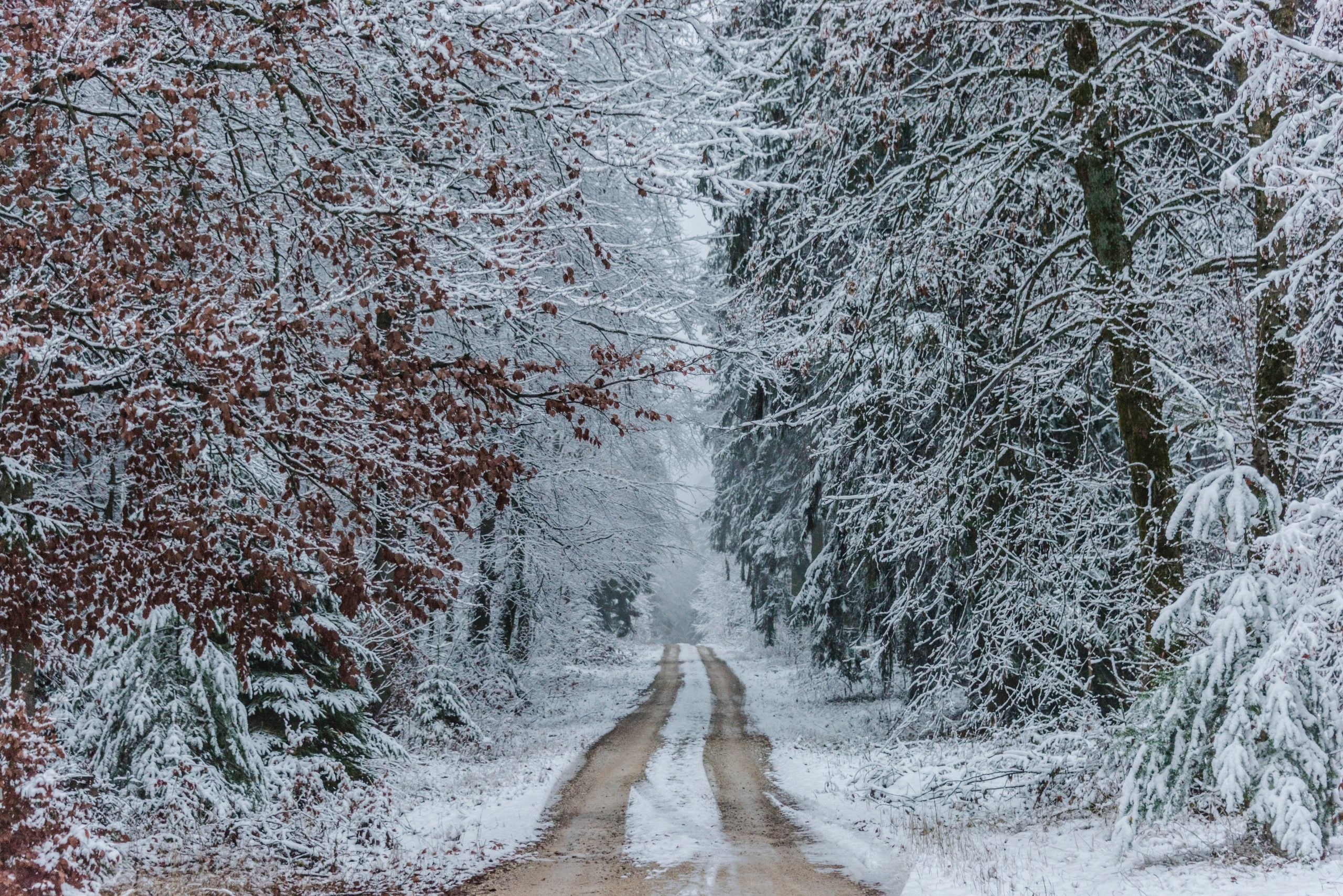 You are currently viewing Advent – A Christmas Journey to Hope:  When Confusion Causes Doubt, Pay Attention to Your Dreams