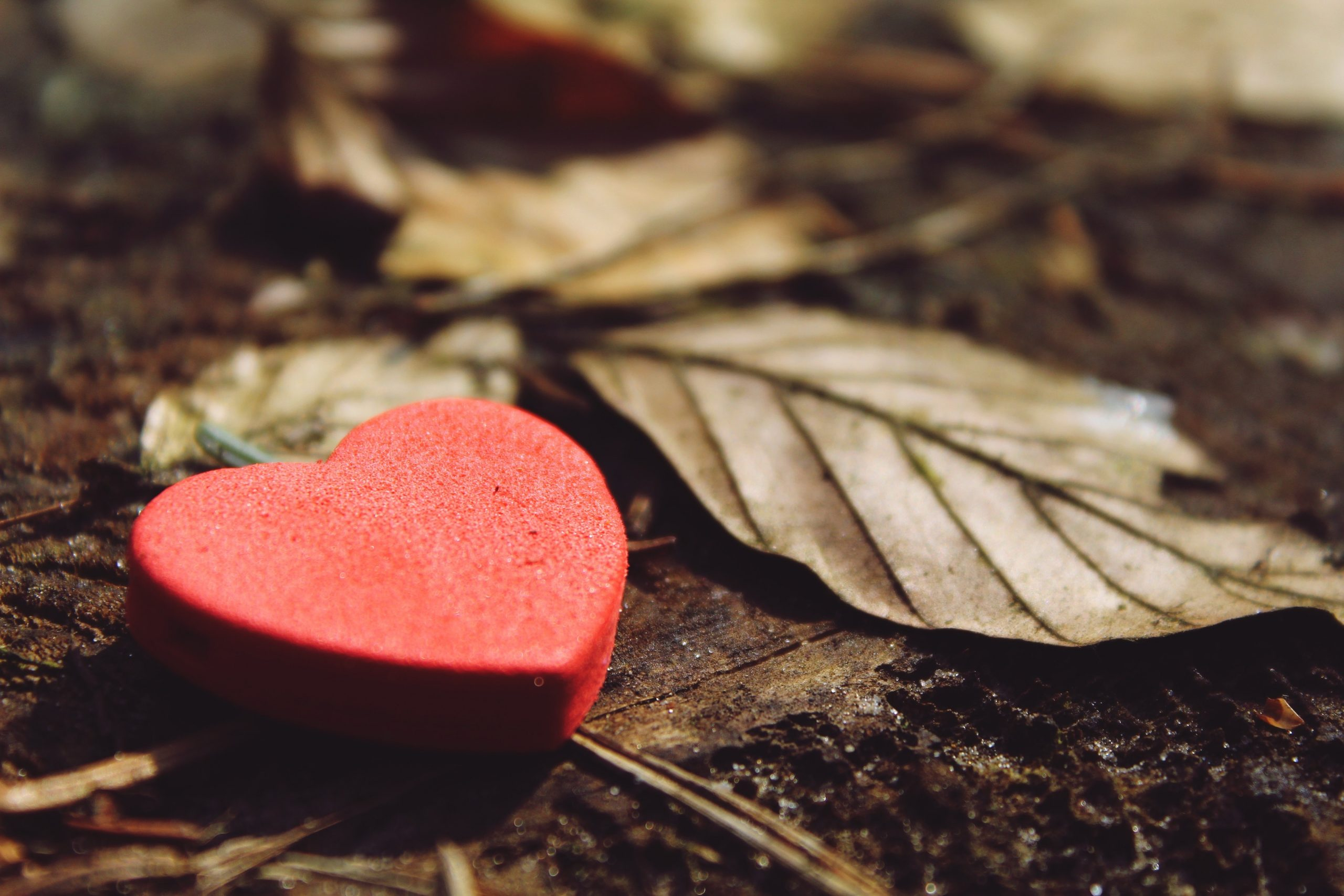 You are currently viewing Matters of the Weary Heart—A 4 Part Series
